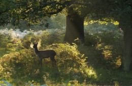 Doe, a Deer | A Poem
