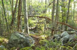 An Ecology of Interfaith   An Essay