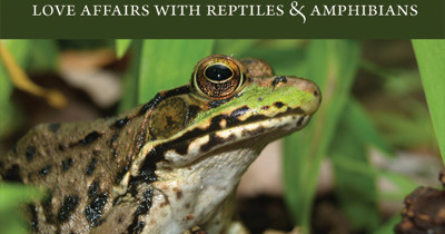 Love Affairs with Reptiles and Amphibians | Now Available!