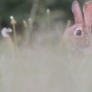 A Rabbit in the Porchlight | A Preview of Wild Life by Jamie K. Reaser