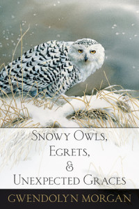 Snowy Owls cover sm