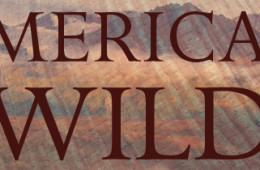 American Wild by Michael Engelhard