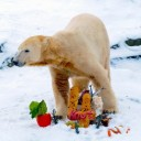 How one polar bear cub had Germany (and the world) enthralled