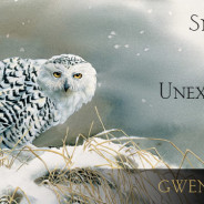 Snowy Owls, Egrets, & Unexpected Graces | Finalist in Foreword Review's Book of the Year Awards